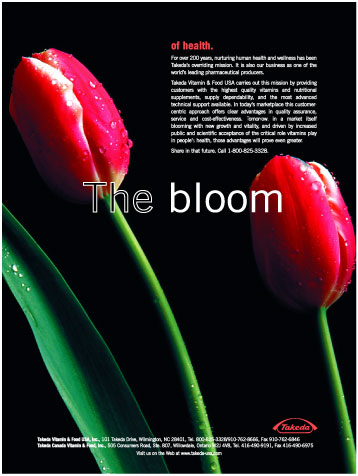The Bloom - Pictured: Tulips